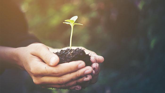SEO-Sight-Soil-Green-Farming